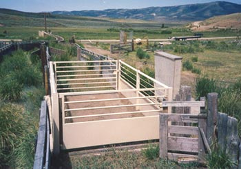 Livestock-scale-1